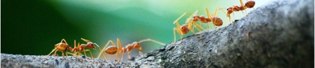 Insetticidi formiche pest control market for Esche per formiche