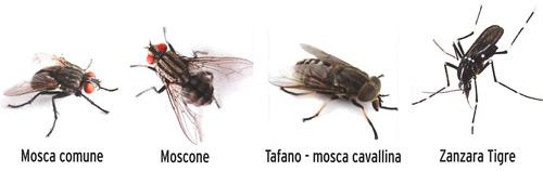 KB NEXA AUTOSVUOTANTE TAC SPRAY contro Cimici dei letti blatte pesciolini d'argento ragni punteruoli scarafaggi zanzare tigre mosche