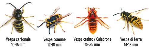 KB NEXA ANTI VESPE RAPIDO contro vespe mosche zanzare