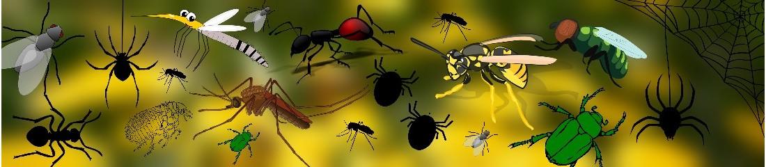 Insetticidi per tipo di insetto